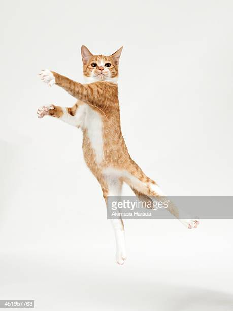 ginger kitten jumping like dancer - jumping stock pictures, royalty-free photos & images