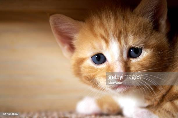 gattino zenzero - gattini appena nati foto e immagini stock
