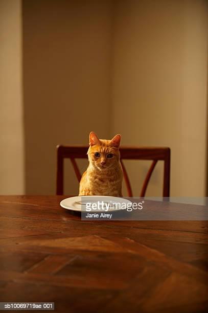 Ginger tigré chat assis à une table de repas avec du poisson