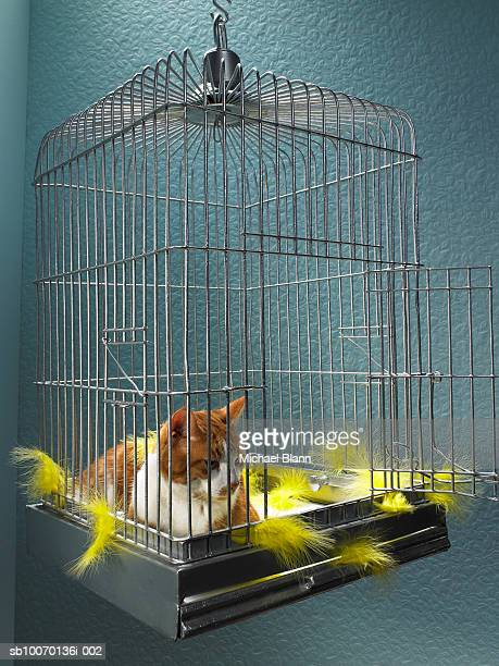 Ginger tabby cat sitting inside birdcage with feather, close-up