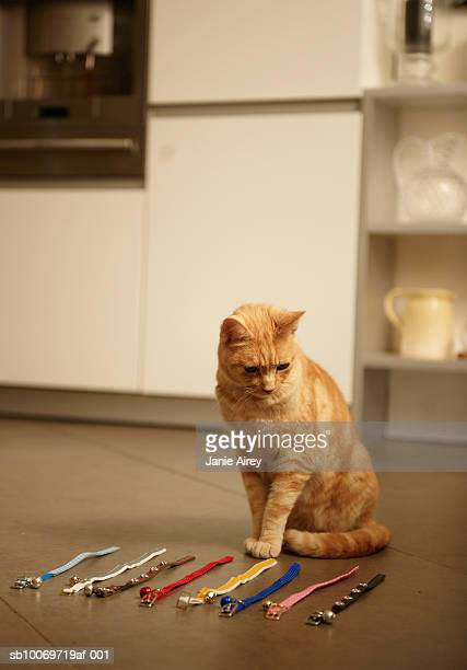 Ginger tabby cat sitting on floor looking at collars