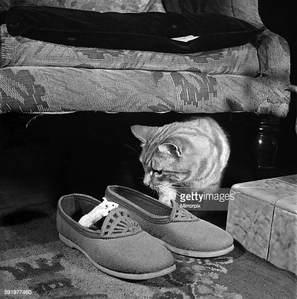 Ginger The cat with mouse Snow-white playing at their home. June 1949 O21396-001