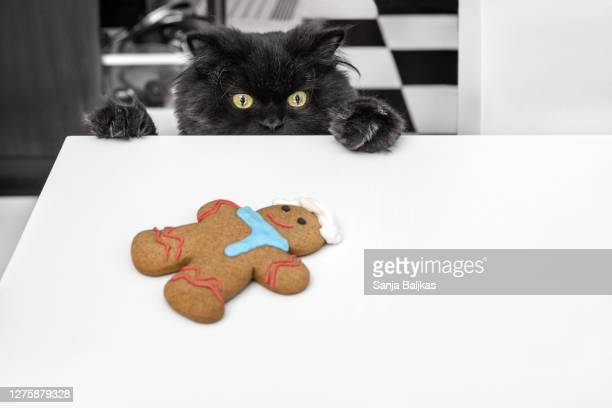 gingerbread and black cat - gingerbread men stock pictures, royalty-free photos & images