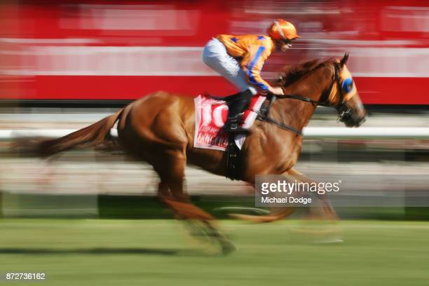 Gingernuts ridden by Mick Dee is seen before race 8 the Emirates Stakes during 2017 Stakes Day at Flemington Racecourse on November 11 2017 in...