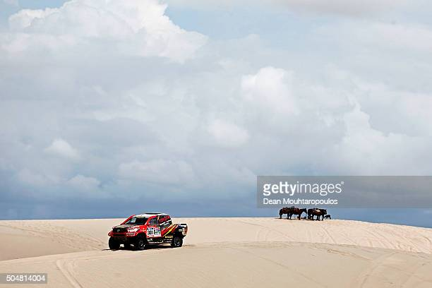 Giniel De Villiers of South Africa and Dirk Von Zitzewitz of Germany in the TOYOTA HILUX for TOYOTA GAZOO RACING pass a group or team of horses while...