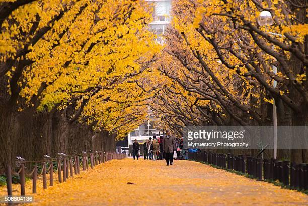 Ginkgo Avenue, Icho Namiki in Tokyo. Autumn