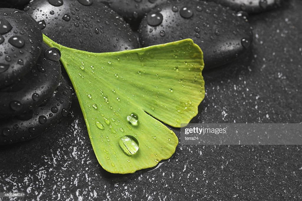 Ginkgo leaves : Stock Photo