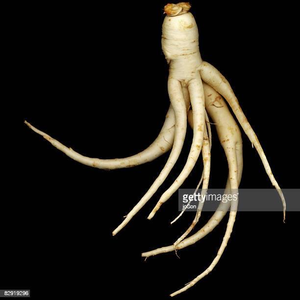 Ginseng roots (panax quinquefolius)