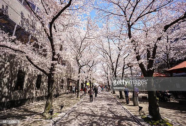 Gion in Spring in Kyoto Japan