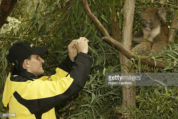 Giorgio Pantano of Italy and the Jordan Formula One Team takea a photo of a koala as he prepares for the the 2004 Australian Grand Prix which begins...