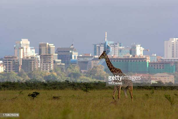 giraffe against city skyline - nairobi stock pictures, royalty-free photos & images