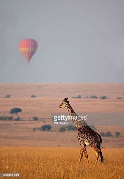 Girafe et en montgolfière