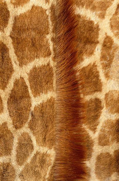 Giraffe Fur Wall Art