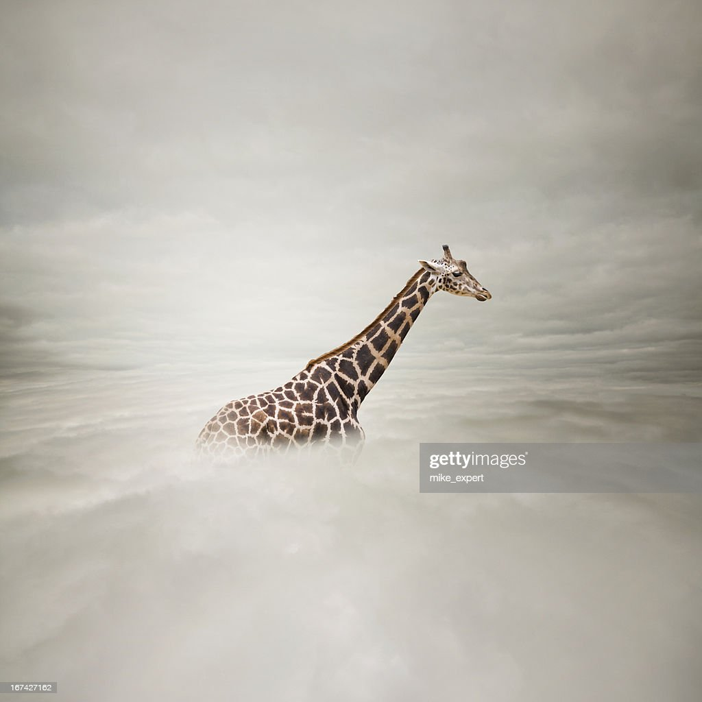giraffe in the sky : Stock Photo