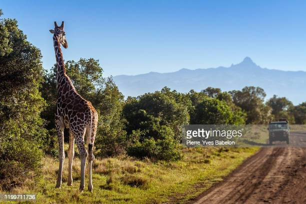 giraffe looking at tourists - long neck animals stock pictures, royalty-free photos & images