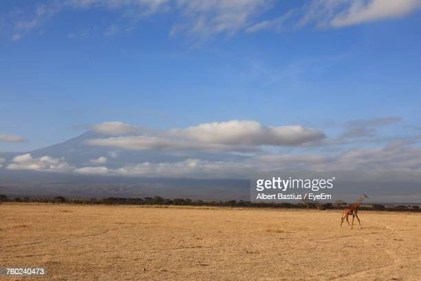 Giraffe On Field Against Cloudy Sky At Amboseli National Park