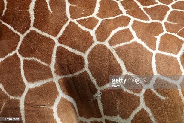 Giraffen-Muster