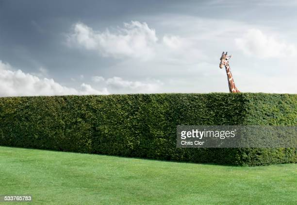 Hedge Stock Photos And Pictures Getty Images