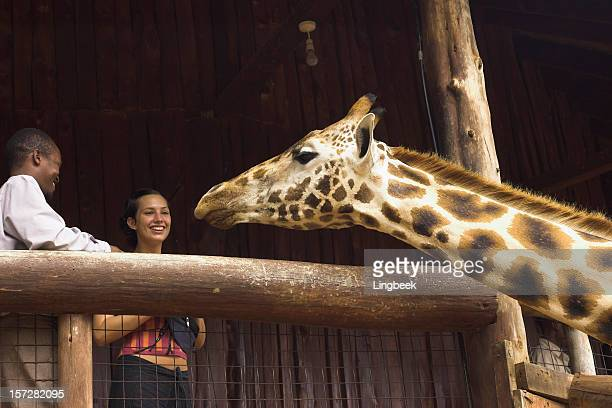 giraffe - nairobi stock pictures, royalty-free photos & images