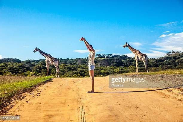 giraffe - south africa stock pictures, royalty-free photos & images