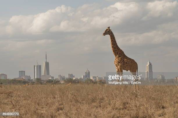 giraffe standing on grassy field against city - nairobi stock pictures, royalty-free photos & images