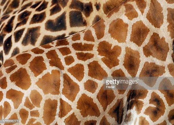 Giraffa texture