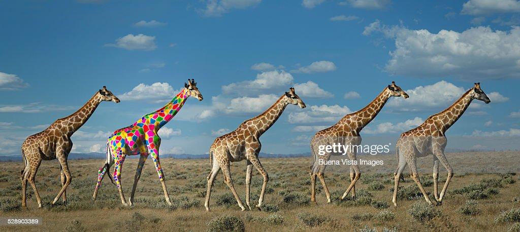 Giraffe with colorful spots : ストックフォト