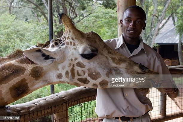 giraffe with ranger - nairobi stock pictures, royalty-free photos & images