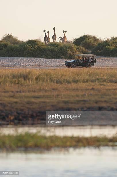 Giraffe with tourists
