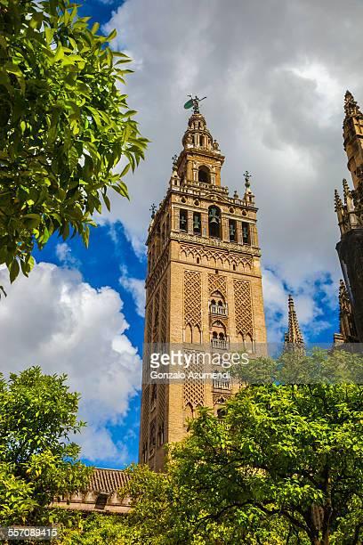 giralda and cathedral in seville in andalusia - la giralda fotografías e imágenes de stock