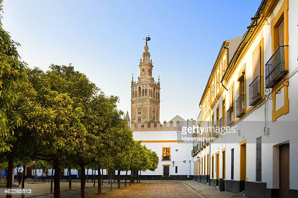 giralda tower view from alcazar - seville stock pictures, royalty-free photos & images