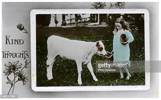Girl about to milk a cow greetings card c18901910