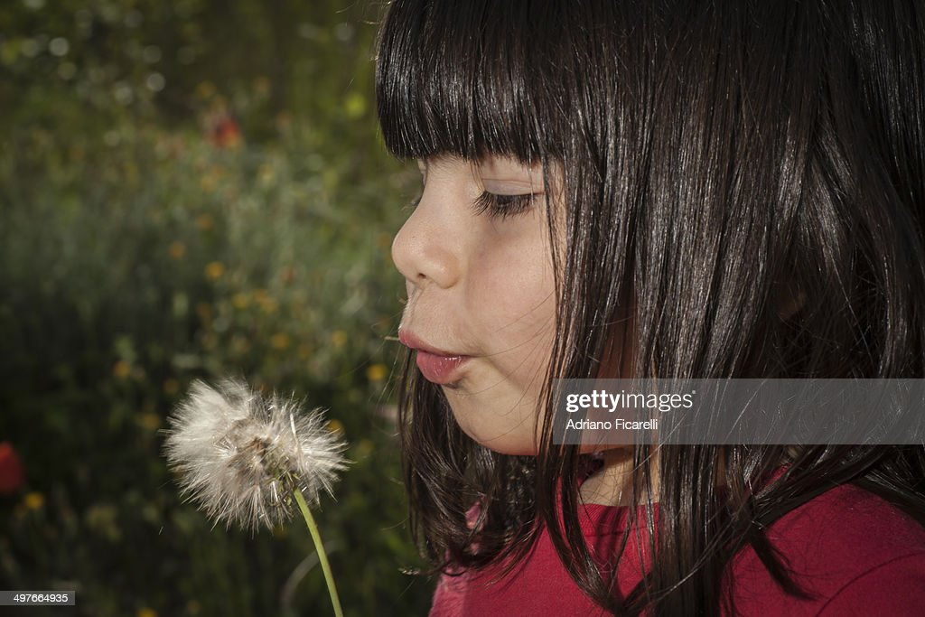 A girl and a dandelion. : Foto stock