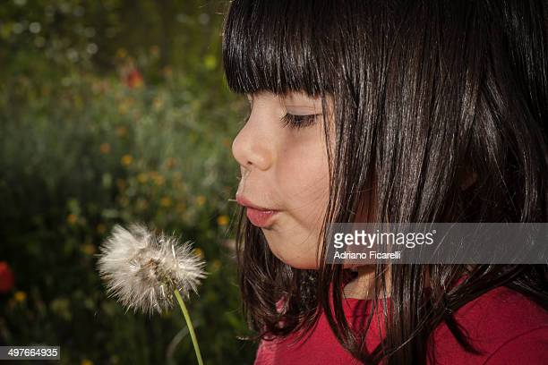 a girl and a dandelion. - adriano ficarelli stock pictures, royalty-free photos & images