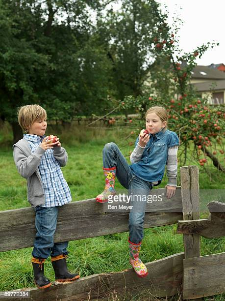 girl and boy eating apples on fence - kid girl eating apple stock photos and pictures