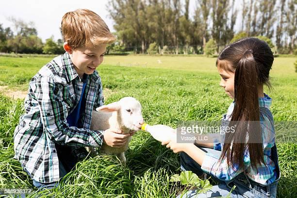 Girl (6-7) and boy (10-11) feeding lamb