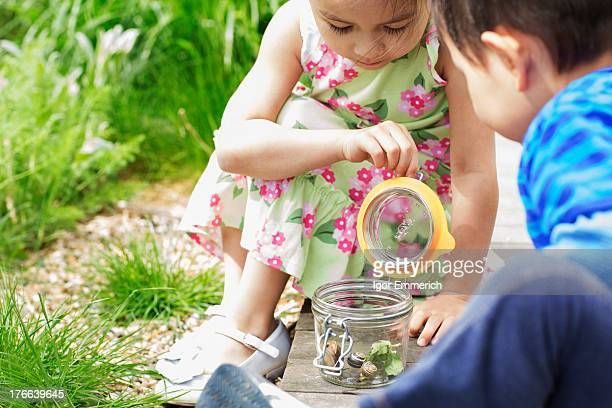 girl and boy in garden watching jar of snails - 蓋 ストックフォトと画像