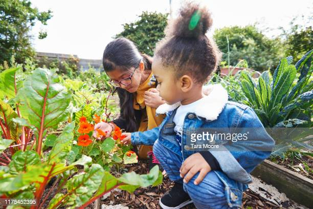 girl and boy looking at flower in community garden - vegetable garden stock pictures, royalty-free photos & images
