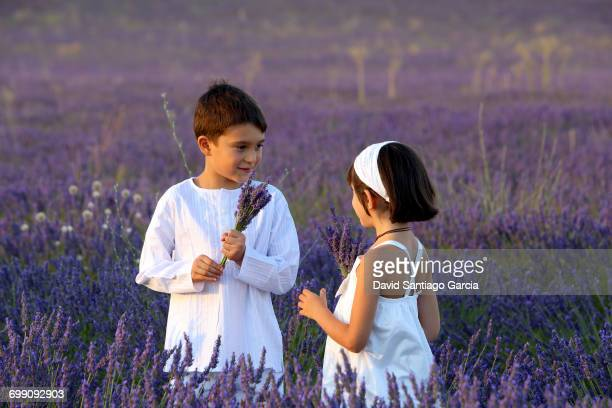 Girl And Boy Playing In The Field Of Lavender