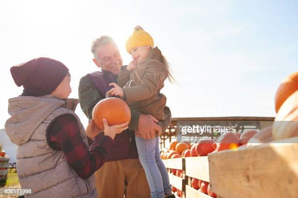 girl and brother with grandfather selecting pumpkins in pumpkin patch field - マゾフシェ県 ストックフォトと画像