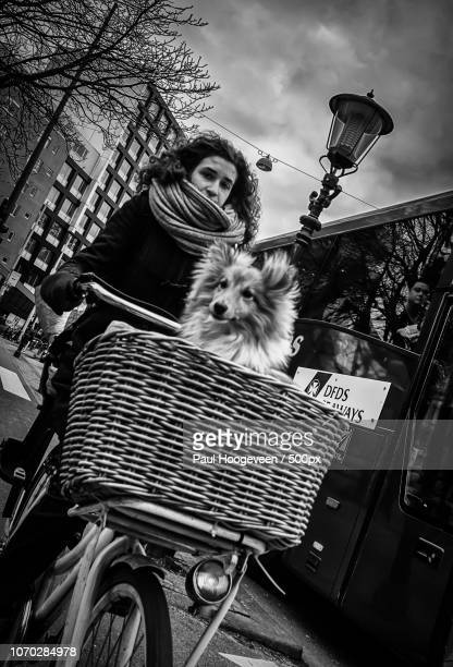 girl and dog @ amsterdam - hoogeveen stock pictures, royalty-free photos & images
