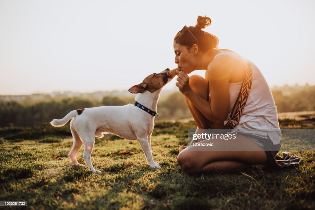 Girl and dog eating ice cream together in a public park in the city : Stock Photo