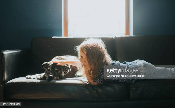 girl and dog on a sofa in sunlight - sofa stock pictures, royalty-free photos & images