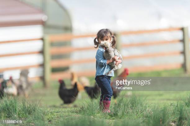 a girl and her chicken - animal related occupation stock pictures, royalty-free photos & images