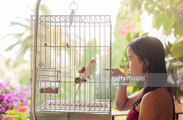 girl and her ninfa bird - child behind bars stock pictures, royalty-free photos & images