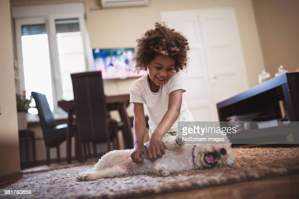 girl and her white dog, indoors - canine stock pictures, royalty-free photos & images