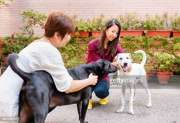 Girl and mother caring two dogs