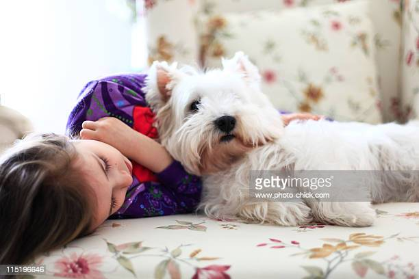 girl and westie - west highland white terrier stock photos and pictures