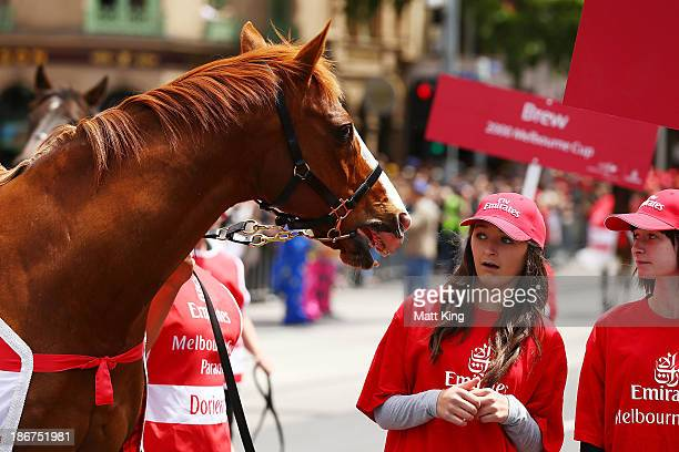 A girl appears frightened as 1995 Mebourne Cup winner Doriemus moves towards her during the 2013 Melbourne Cup Parade on November 4 2013 in Melbourne...