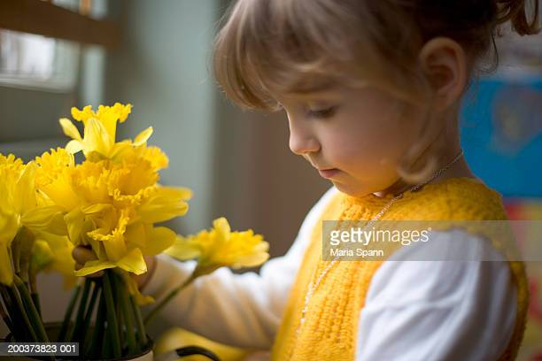 girl (2-4) arranging daffodils in vase, side view - daffodils stock photos and pictures